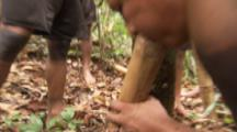 Indigenous People In Amazon Forest,Bullet Ant Ritual,collect ants with sticks