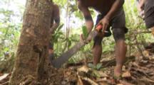 Indigenous People In Amazon Forest,Bullet Ant Ritual,Searching for ants