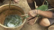 Indigenous People In Amazon Forest,Bullet Ant Ritual,adding ants to bowl of leaves to drug them