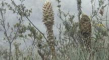 Strange Plants, Possibly Puya