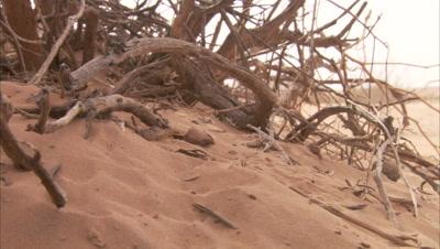 Scorpion In Desert