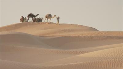 People Walk Camels Over Vast Desert Sand Dunes