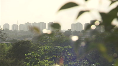 View of City Skyline Through Trees