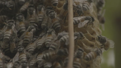 Close Up Of Beehive With Bees