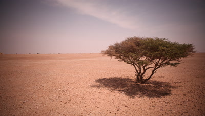Time Lapse,Shadow,Shade from Acacia Tree in Desert