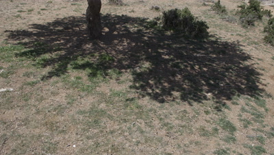 Time Lapse,Shadow From Tree Moves Over Ground,Dog rolls,Scratches on Trunk