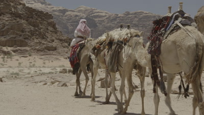 Bedouin Rides and Leads Camels in Jordan Desert