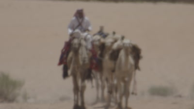 Bedouin Rides and Leads Camels in Heat haze of Jordan Desert