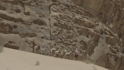 Bedouin Rides and Leads Camels Past Cliffs in Wadi Rum