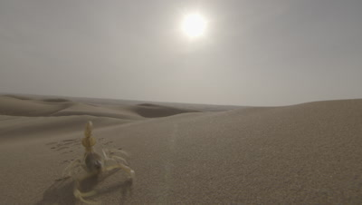 Scorpion Scuttles Across Desert Sand Dune,Bright Sun Behind