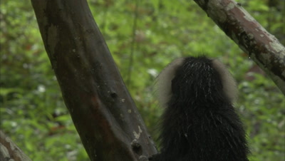 Lion-Tailed Macaque Sitting On A Branch Of A Tree
