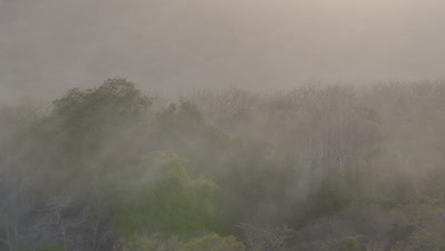 Morning mist rises from jurassic-like island forest