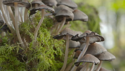 Mushrooms growing on moss covered tree branch