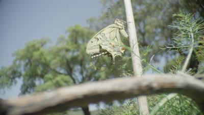 Swallowtail butterfly climbing up a branch