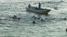 Ws Divers Trying To Grab Dolphins