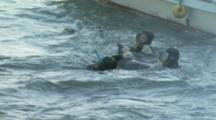 Group Of Divers Move Dolphin To Net On Side Of Boat