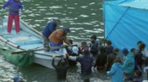 Trainers, Divers Tie Captured Dolphin To Boat