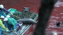 Fishermen In Boat Pull Multiple Dead Dolphins Out Of Bloody Water