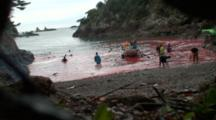 Dead Dolphins Are Hauled Away By Boat