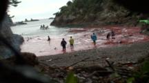 Dead Dolphins Hauled Around In Bloody Water By Fishermen