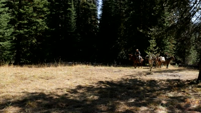 Riding horses and pack mules heading out from wilderness camp