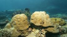 Time Lapse Of Crinoid Coming Out To Filter Feed At Dusk On Coral Reef, Wide