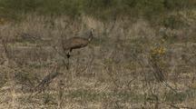 Emus + Wildflowers
