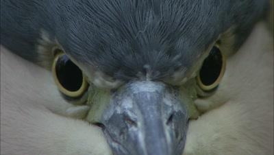 High Definition Bird Stock Footage