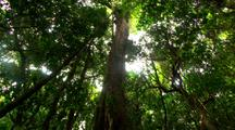 Dense Vegetation In Rainforest, Pan Roots To Canopy