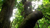 Dense Vegetation In Rainforest, Fern And Tree Trunk