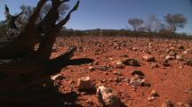 The Granites - Red Dirt + Tree Stump