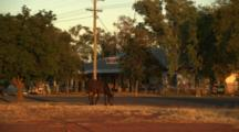 Horse Grazes On Side Of Road In Town