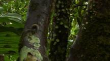 Slug On Tree In Australian Rainforest