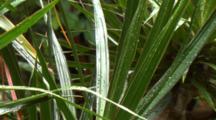 Close Up Wet Leaves In Australian Rainforest