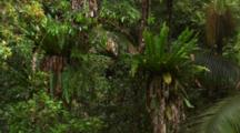 Close Up Plants In Australian Rainforest