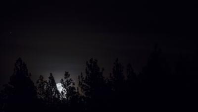 full moon rising behind tree line timelapse