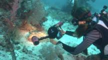 Diver Photographs Wobbegong
