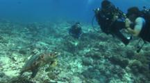 Scuba Divers Tries To Touch Turtle But Is Stopped By The Dive Guide