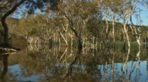 Melaleuca Paperbark Tea Trees reflecting in Lake