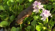 Anaconda Close Up Moves Over Plants