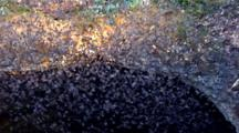 Millions Bats Fly In Vortex Emerging From Cave