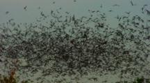 Millions Bats Fill Sky Heading Away From Cave