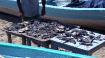 Fisherman Turns Shark Fins Drying In Sun