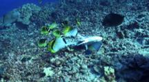 Variety Reef Fish Nibbling On Mahi Mahi Carcass