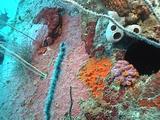 Marine Growth, Navy Hellcat Fuselage Sunk In Majuro Lagoon