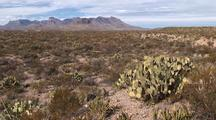 Chisos Mountains, Prickly Pear Cactus; Zoom, Pullback; Big Bend National Park, U.S. National Parks