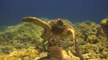 One Turtle Leaves Fight, Other Looks On