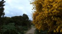 Flowering Plants Line Trail To Beach, Chiloe National Park