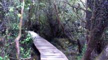Walkway Through Savanna, Forest, Isla Chiloe National Park