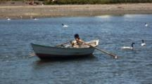 Fisherman Rows Across Inlet With Black Necked Swans